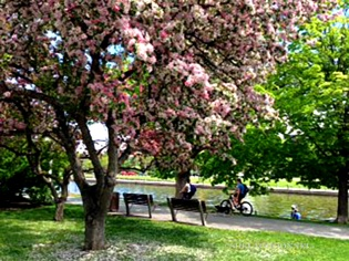 By Rideau Canal 2 Copyright Shelagh Donnelly